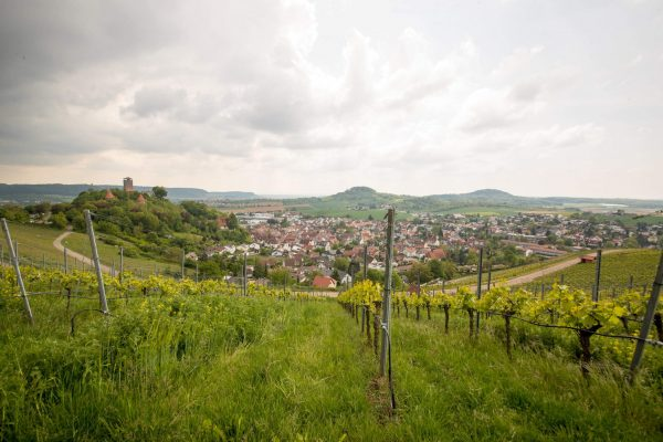 Protec 35 jähriges Jubiläum Weinwanderung 12QC2449