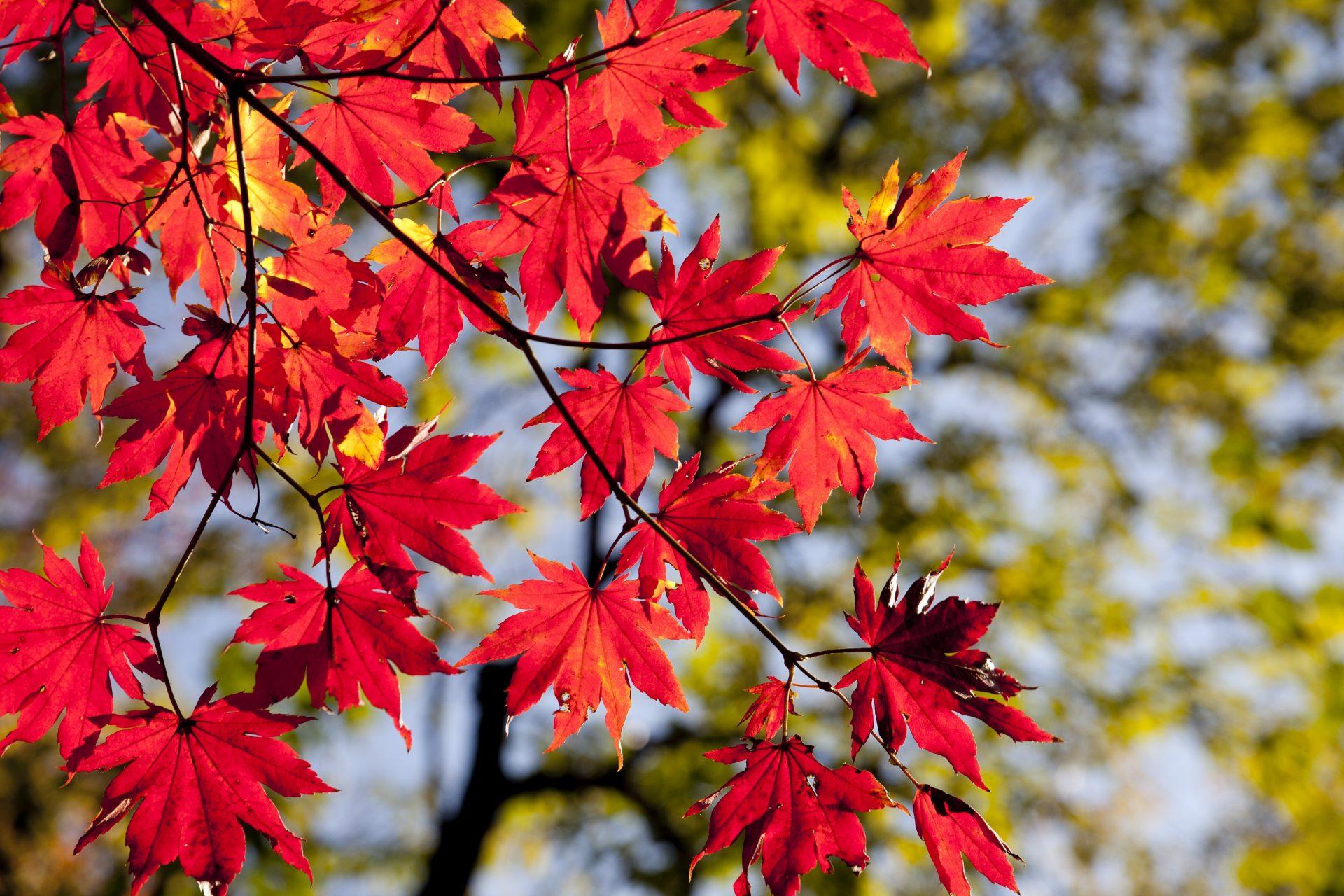 Messehighlights im Herbst
